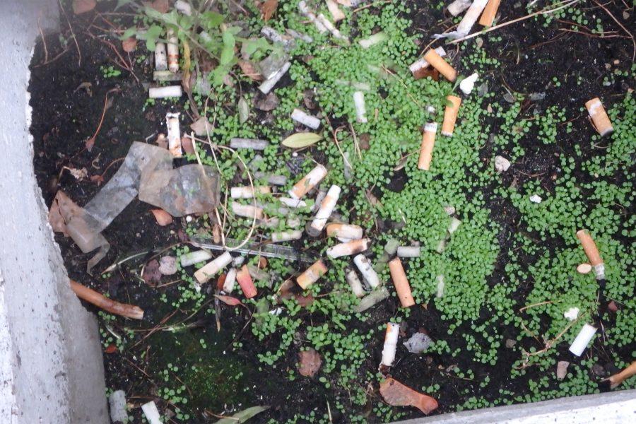La ville est vivante – 1. La pollution : collection/inventaire de déchets